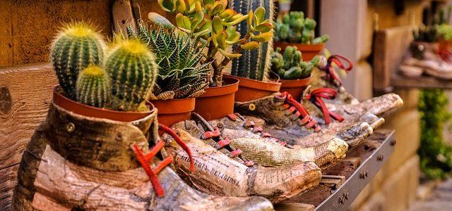 Oude schoenen als bloempot, hergebruik